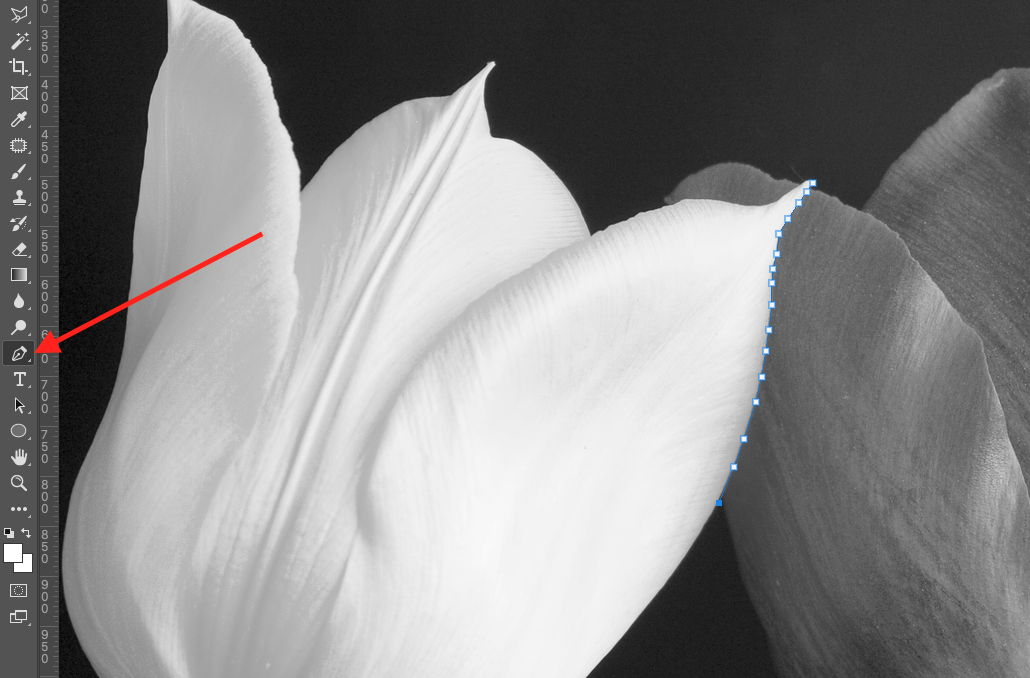 A close up of a flower  Description automatically generated